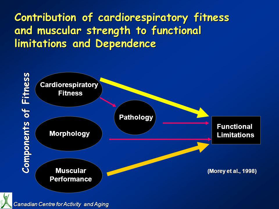 Contribution of cardiorespiratory fitness and muscular strength to functional limitations and Dependence M Cardiorespiratory Fitness Morphology Muscular Performance Pathology Functional Limitations (Morey et al., 1998) Components of Fitness Canadian Centre for Activity and Aging Canadian Centre for Activity and Aging