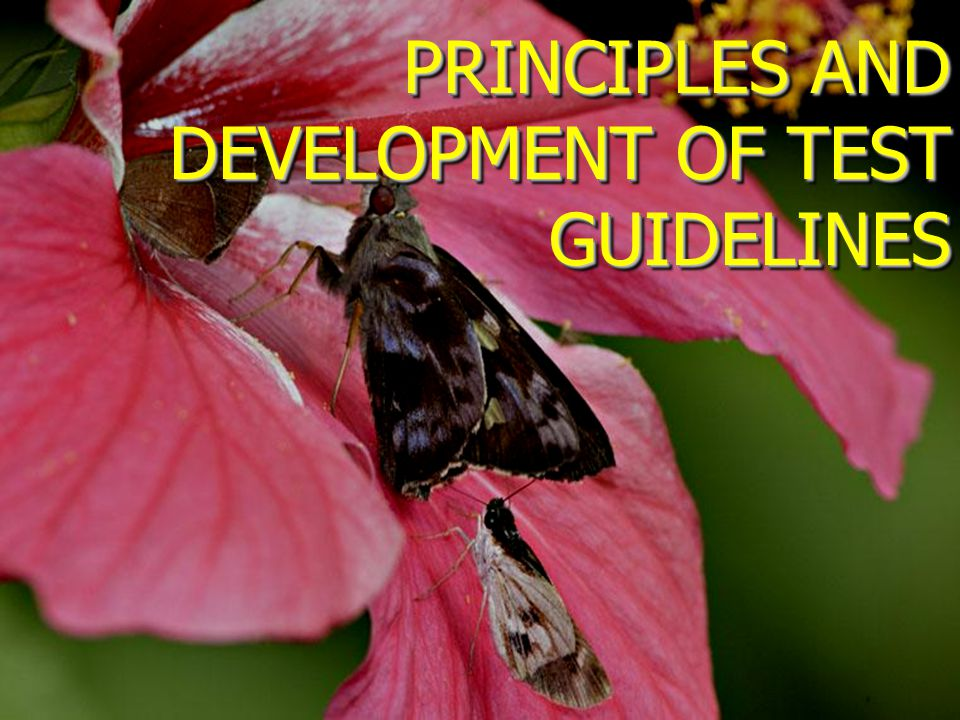 PRINCIPLES AND DEVELOPMENT OF TEST GUIDELINES