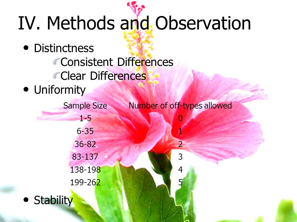IV. Methods and Observation Distinctness Consistent Differences Clear Differences Uniformity Stability Sample SizeNumber of off-types allowed 1-50 6-3