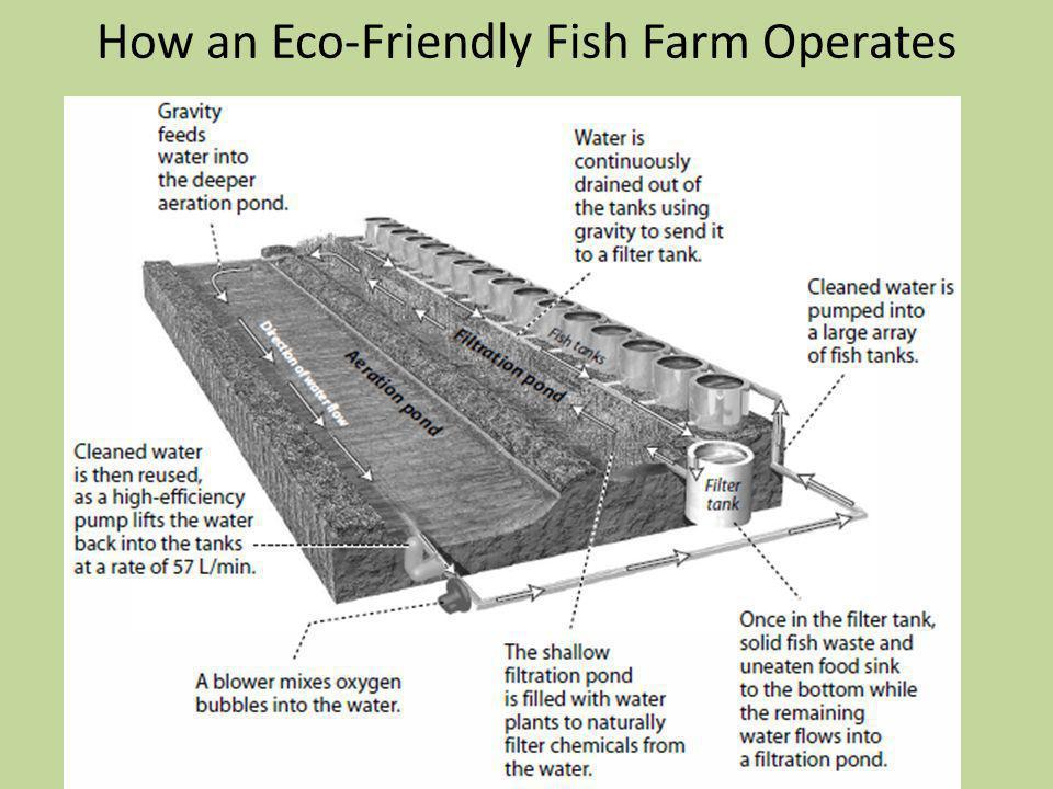 How an Eco-Friendly Fish Farm Operates