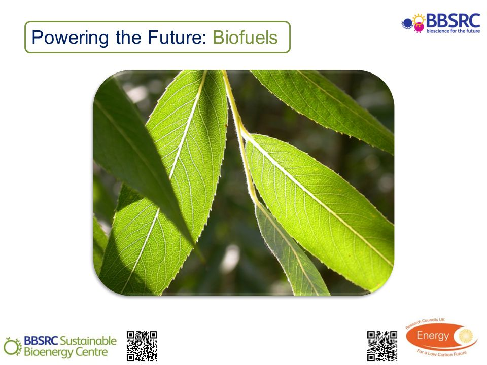 Powering the Future: Biofuels