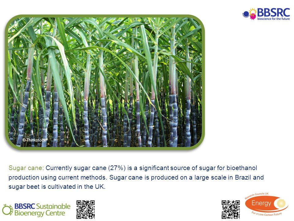Sugar cane: Currently sugar cane (27%) is a significant source of sugar for bioethanol production using current methods.