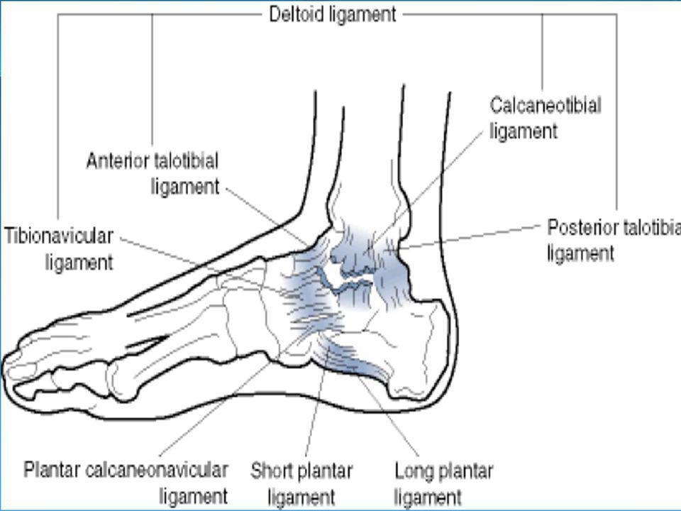 Talar Tilt (Eversion) Patient sitting with legs over table Stabilize distal tibia, and grasp calcaneus Tilt the calcaneus into abduction Pain and/or l
