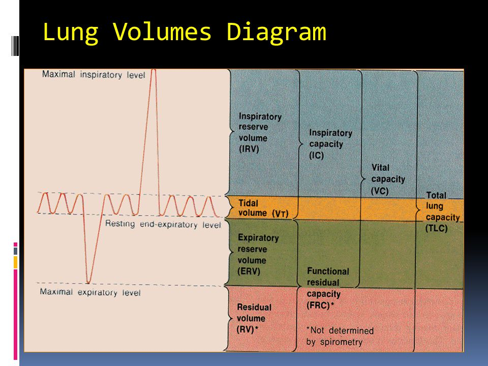 Lung Volumes Diagram