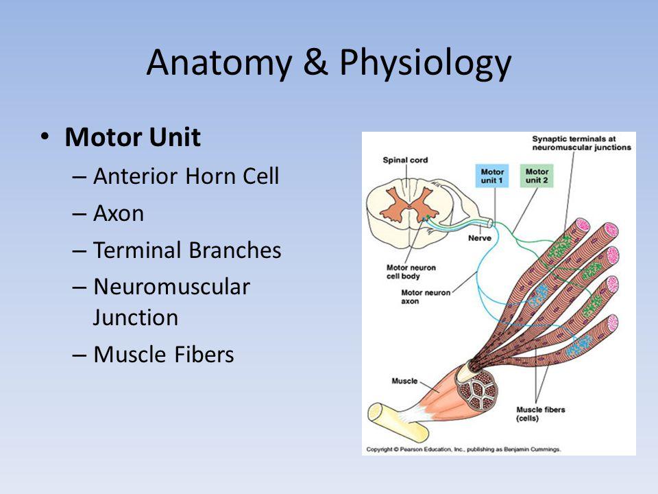 Abnormal Spontaneous Activity Fibrillation Potential (Fib) – Membrane Instability Denervation Myopathy Trauma Positive Sharp Wave (PSW) – Same significance as Fib
