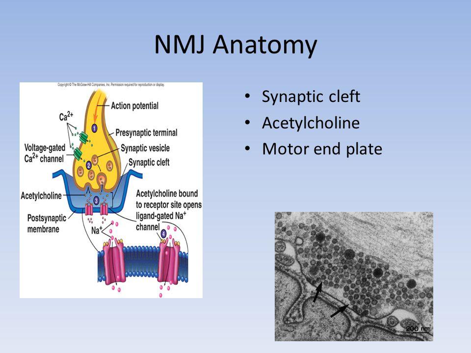 Evolution of NCS/EMG Changes Axonal Loss – <3 days old No Wallerian Degeneration DISTAL NCS normal!.