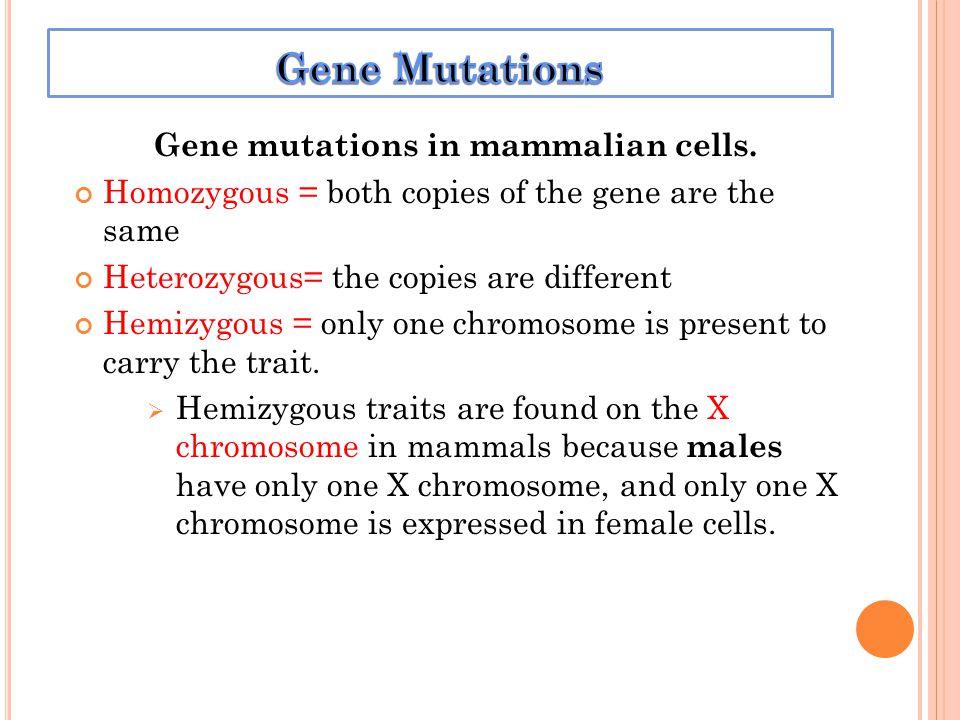 Gene mutations in mammalian cells.