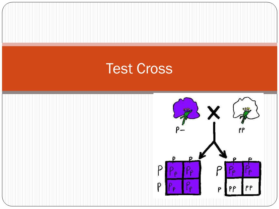 What is a test cross.