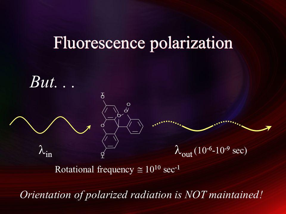 Fluorescence polarization immunoassay Polarization maintained Slow rotation Rapid rotation Polarization lost