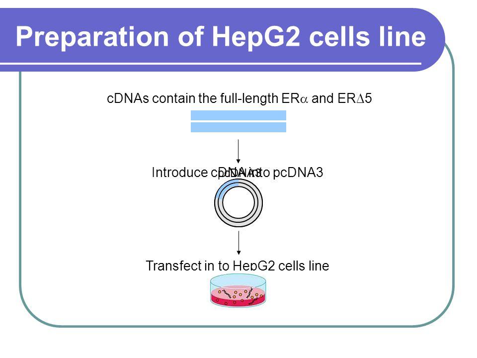 HepG2 + ER 5 HepG2 + ER α MTT assay stock solution con c1 con c4 con c3 con c2 con c5 con trol Cytotoxicity test