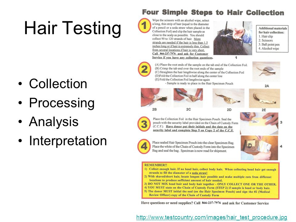 Hair Testing Collection Processing Analysis Interpretation http://www.testcountry.com/images/hair_test_procedure.jpg