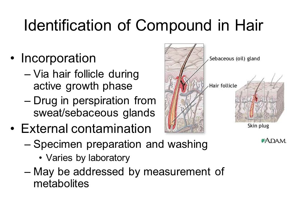Identification of Compound in Hair Incorporation –Via hair follicle during active growth phase –Drug in perspiration from sweat/sebaceous glands Exter