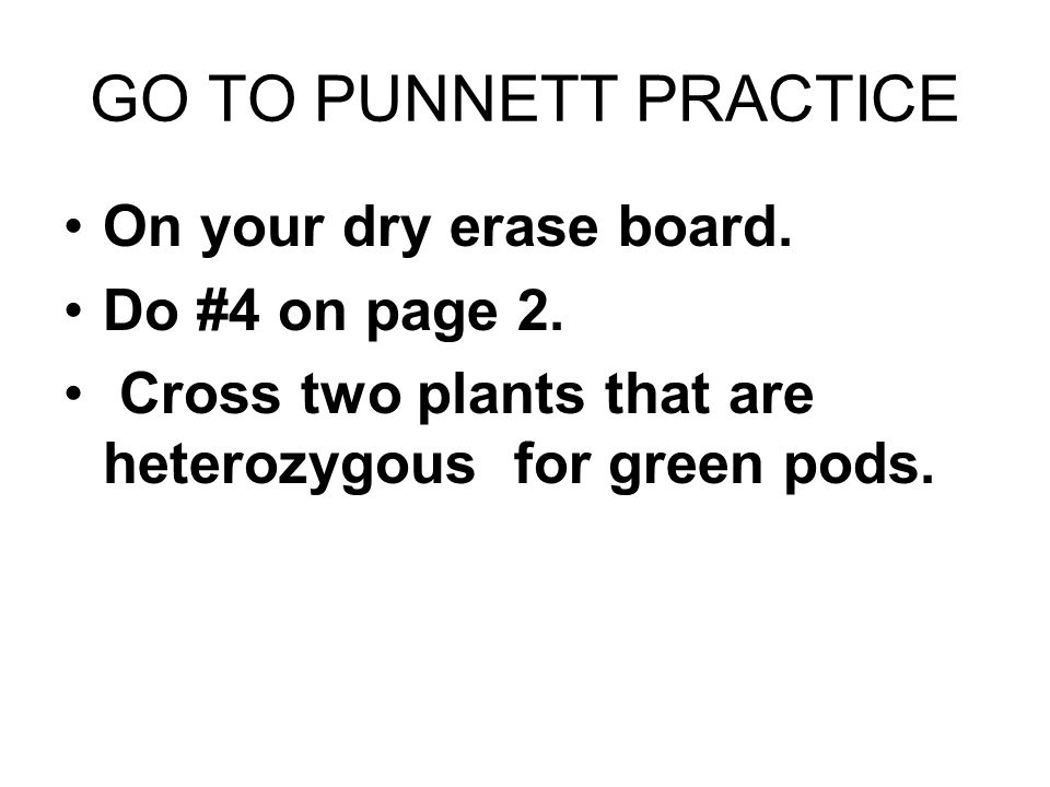 GO TO PUNNETT PRACTICE On your dry erase board. Do #4 on page 2. Cross two plants that are heterozygous for green pods.