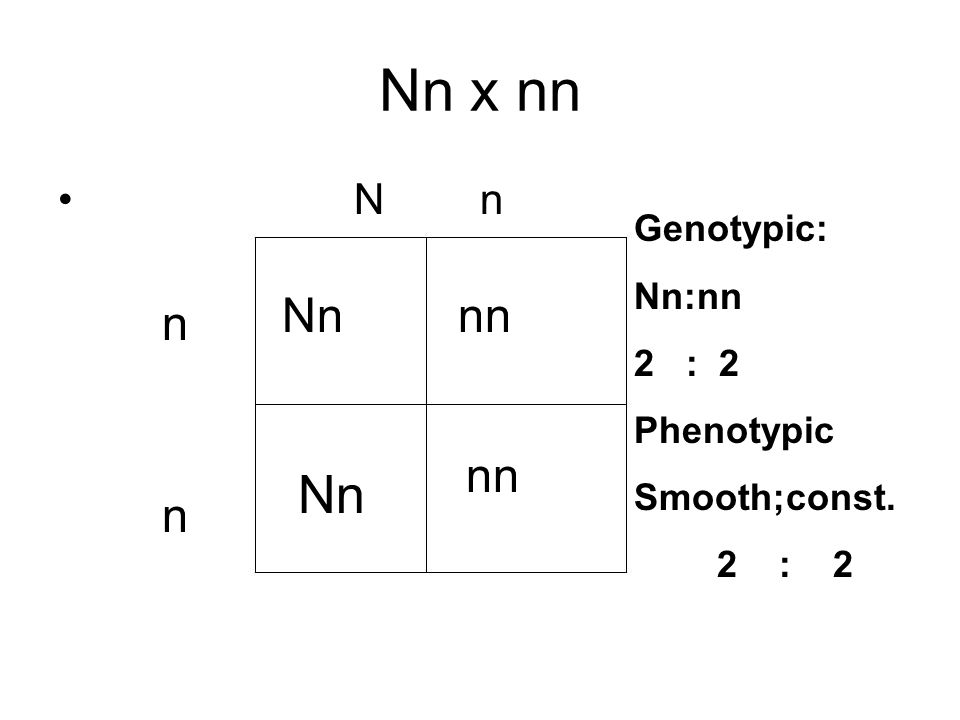 Nn x nn N n n n nn Nn nn Genotypic: Nn:nn 2 : 2 Phenotypic Smooth;const. 2 : 2