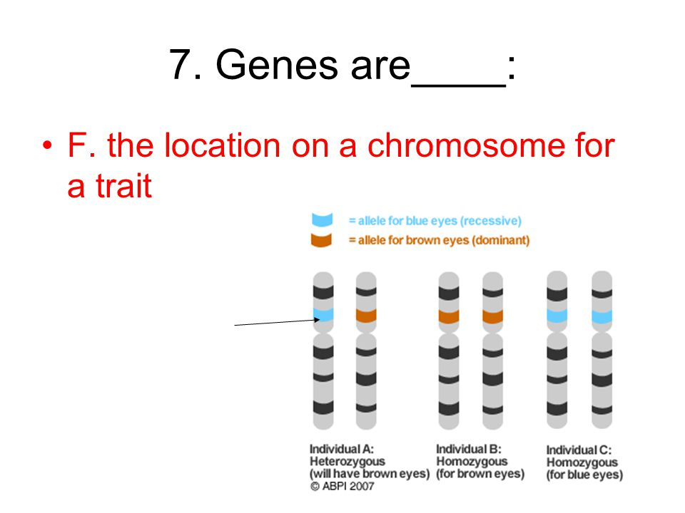 7. Genes are____: F. the location on a chromosome for a trait
