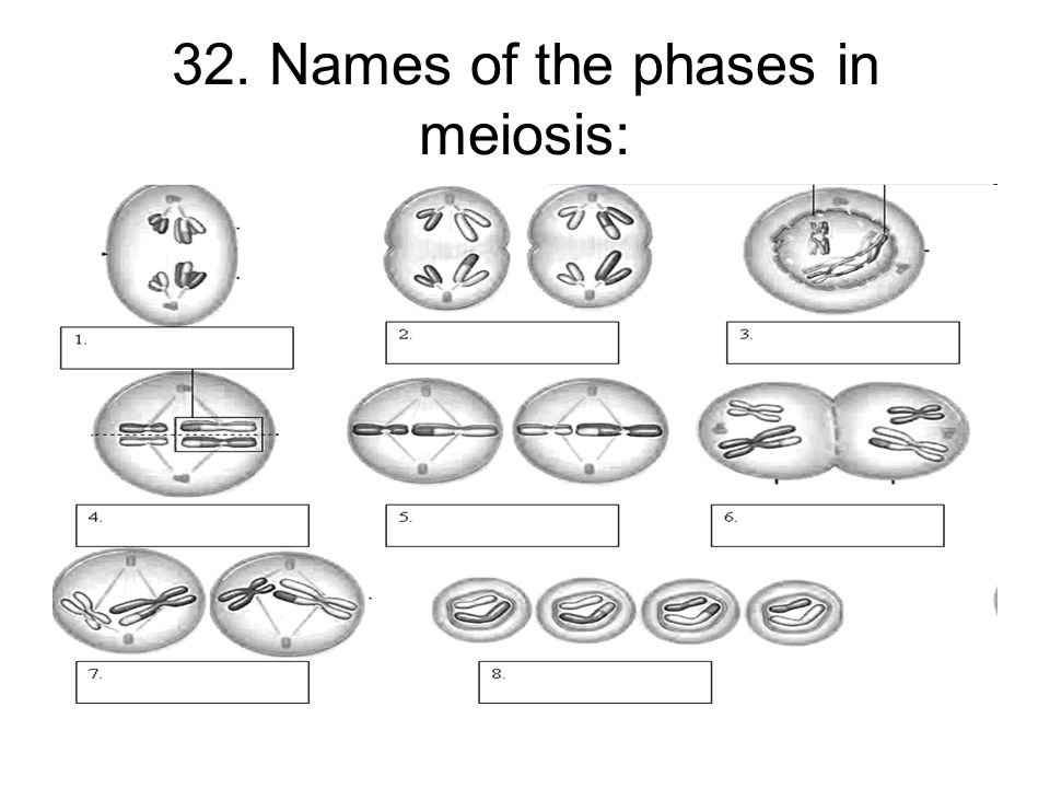 Meiosis Matching Worksheet Free Worksheets Library – Meiosis Worksheet Key