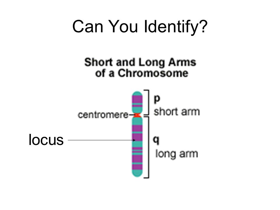 Can You Identify? locus