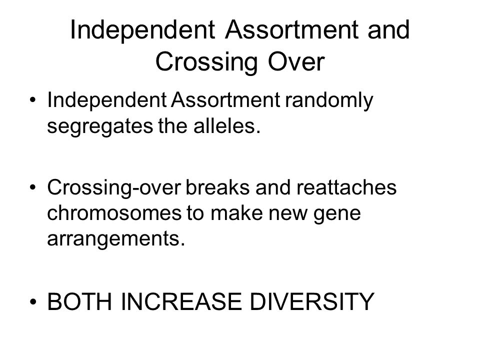 Independent Assortment and Crossing Over Independent Assortment randomly segregates the alleles. Crossing-over breaks and reattaches chromosomes to ma