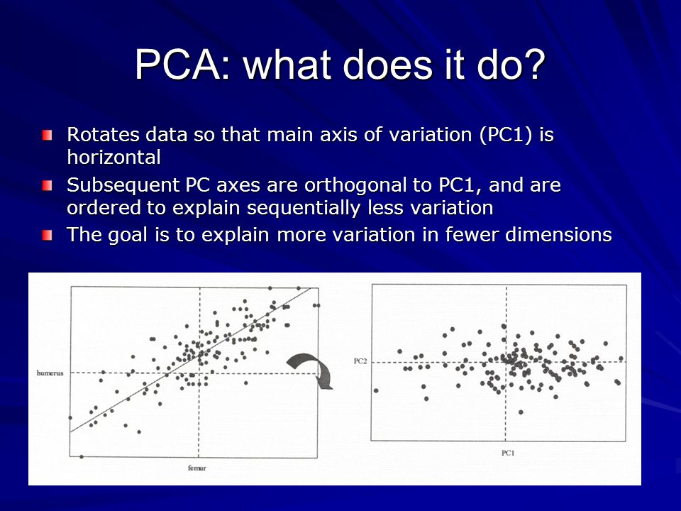 PCA: interpretations Eigenvectors are linear combinations of original variables (interpreted by PC loadings of each variable) PCA PRESERVES EUCLIDEAN DISTANCES among objects PCA does NOTHING to the data, except rotate it to axes expressing the most variation; it loses NO INFORMATION (if all PC vectors retained) If the original variables are uncorrelated, PCA not helpful in reducing dimensionality of data PCA does not find a particular factor (e.g., group differences, allometry): it identifies the direction of most variation, which may be interpretable as a factor (but may not)
