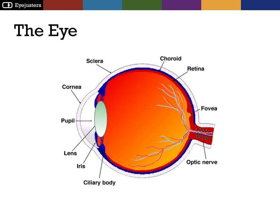 Refractive Error Short-sightedness (Myopia) Long-sightedness (Hyperopia) Normal eye (Emmetropia)