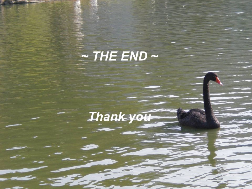 ~ THE END ~ Thank you
