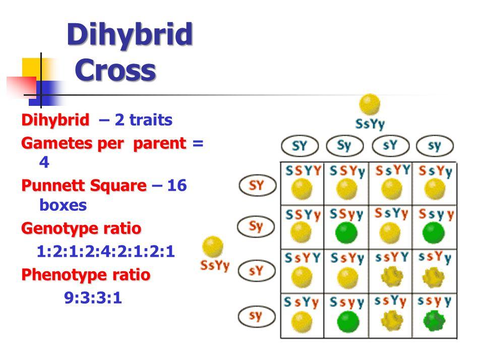 Dihybrid Cross Dihybrid Dihybrid – 2 traits Gametes per parent Gametes per parent = 4 Punnett Square Punnett Square – 16 boxes Genotype ratio 1:2:1:2:4:2:1:2:1 Phenotype ratio 9:3:3:1