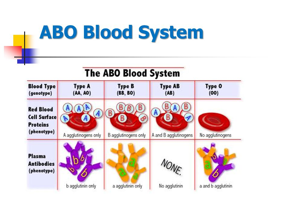 ABO Blood System