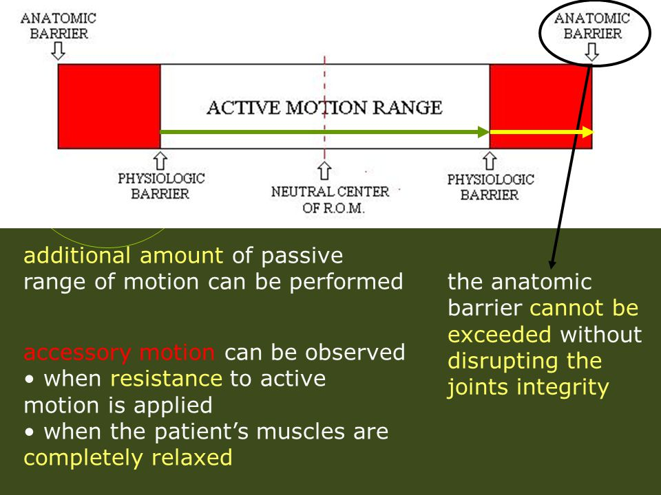 additional amount of passive range of motion can be performed accessory motion can be observed when resistance to active motion is applied when the pa