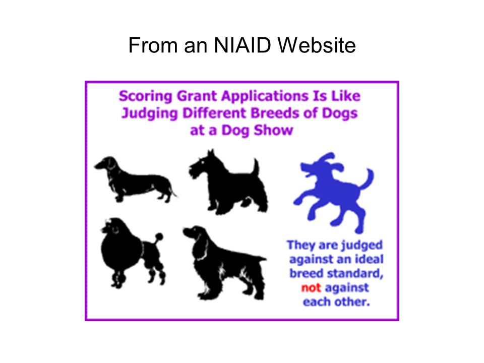From an NIAID Website