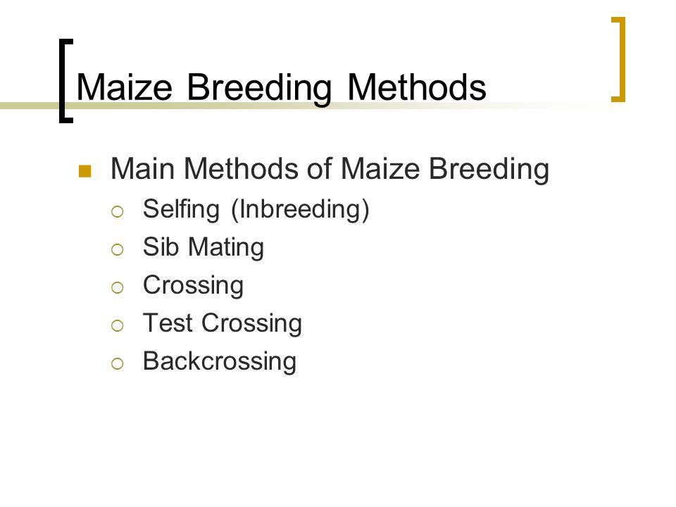 Maize Breeding Methods Main Methods of Maize Breeding Selfing (Inbreeding) Sib Mating Crossing Test Crossing Backcrossing