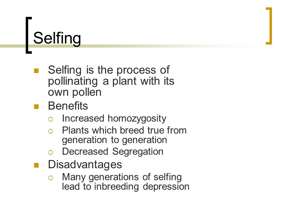 Selfing Selfing is the process of pollinating a plant with its own pollen Benefits Increased homozygosity Plants which breed true from generation to g