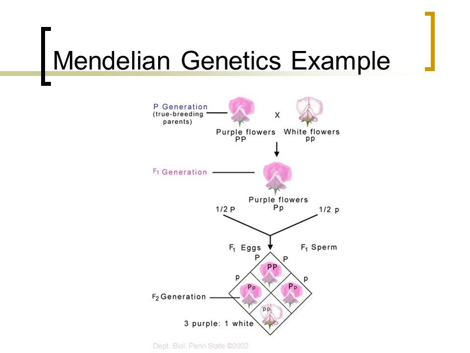 Mendelian Genetics Example