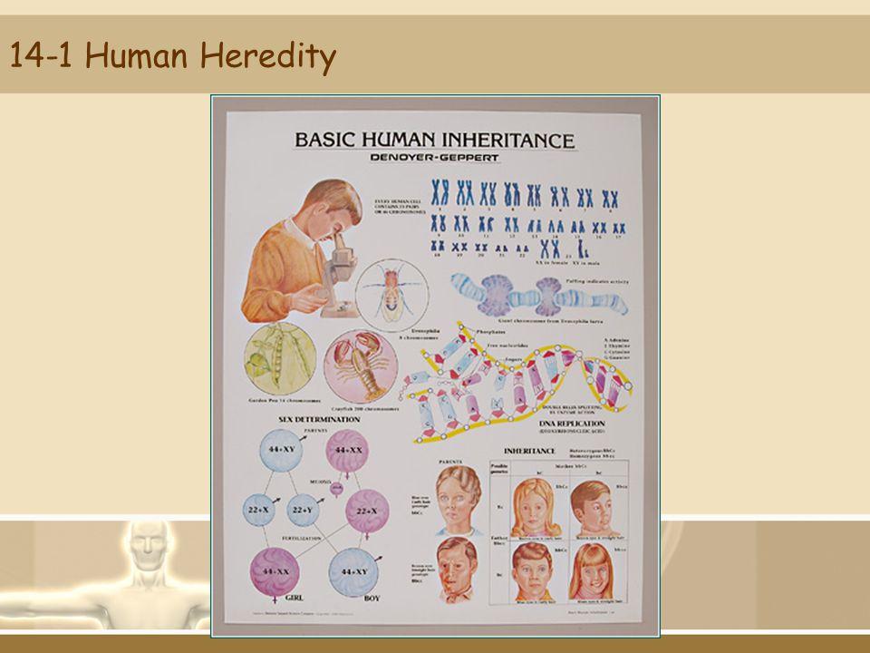 14-1 Human Heredity