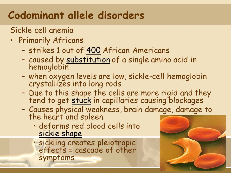 Codominant allele disorders Sickle cell anemia Primarily Africans –strikes 1 out of 400 African Americans –caused by substitution of a single amino ac