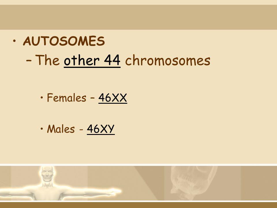 AUTOSOMES –The other 44 chromosomes Females – 46XX Males - 46XY