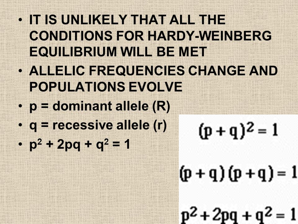 IT IS UNLIKELY THAT ALL THE CONDITIONS FOR HARDY-WEINBERG EQUILIBRIUM WILL BE MET ALLELIC FREQUENCIES CHANGE AND POPULATIONS EVOLVE p = dominant allele (R) q = recessive allele (r) p 2 + 2pq + q 2 = 1