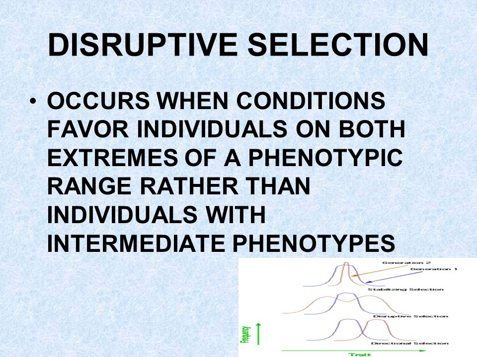 DISRUPTIVE SELECTION OCCURS WHEN CONDITIONS FAVOR INDIVIDUALS ON BOTH EXTREMES OF A PHENOTYPIC RANGE RATHER THAN INDIVIDUALS WITH INTERMEDIATE PHENOTYPES