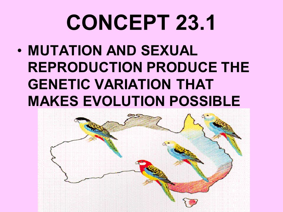 CONCEPT 23.1 MUTATION AND SEXUAL REPRODUCTION PRODUCE THE GENETIC VARIATION THAT MAKES EVOLUTION POSSIBLE