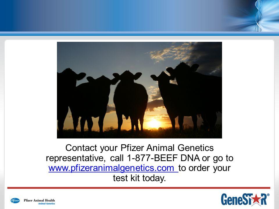 Contact your Pfizer Animal Genetics representative, call 1-877-BEEF DNA or go to www.pfizeranimalgenetics.com to order your test kit today.
