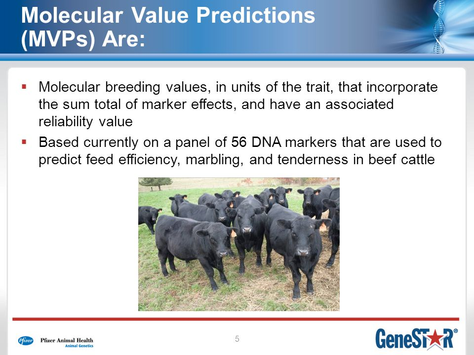 5 Molecular Value Predictions (MVPs) Are: Molecular breeding values, in units of the trait, that incorporate the sum total of marker effects, and have an associated reliability value Based currently on a panel of 56 DNA markers that are used to predict feed efficiency, marbling, and tenderness in beef cattle