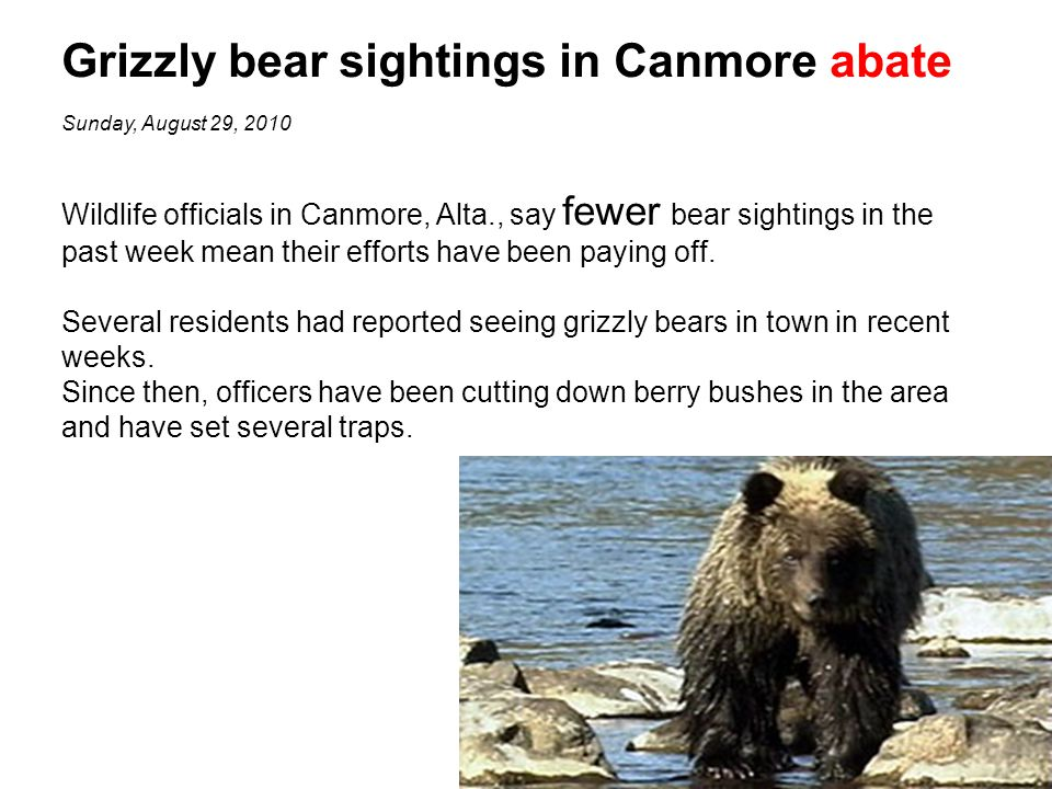 Grizzly bear sightings in Canmore abate Sunday, August 29, 2010 Wildlife officials in Canmore, Alta., say fewer bear sightings in the past week mean their efforts have been paying off.