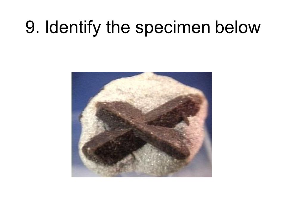 9. Identify the specimen below