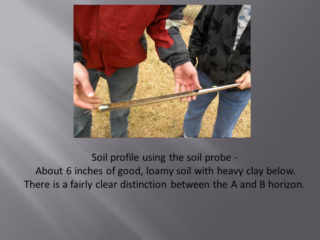 Soil profile using the soil probe - About 6 inches of good, loamy soil with heavy clay below. There is a fairly clear distinction between the A and B