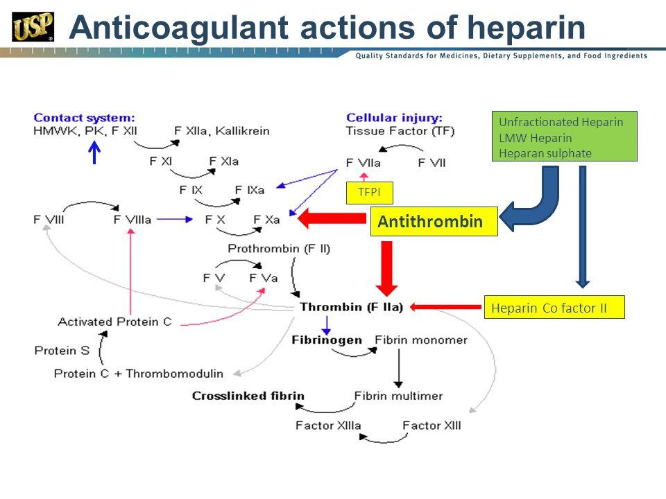 Anticoagulant actions of heparin Heparin Co factor II Unfractionated Heparin LMW Heparin Heparan sulphate TFPI Antithrombin