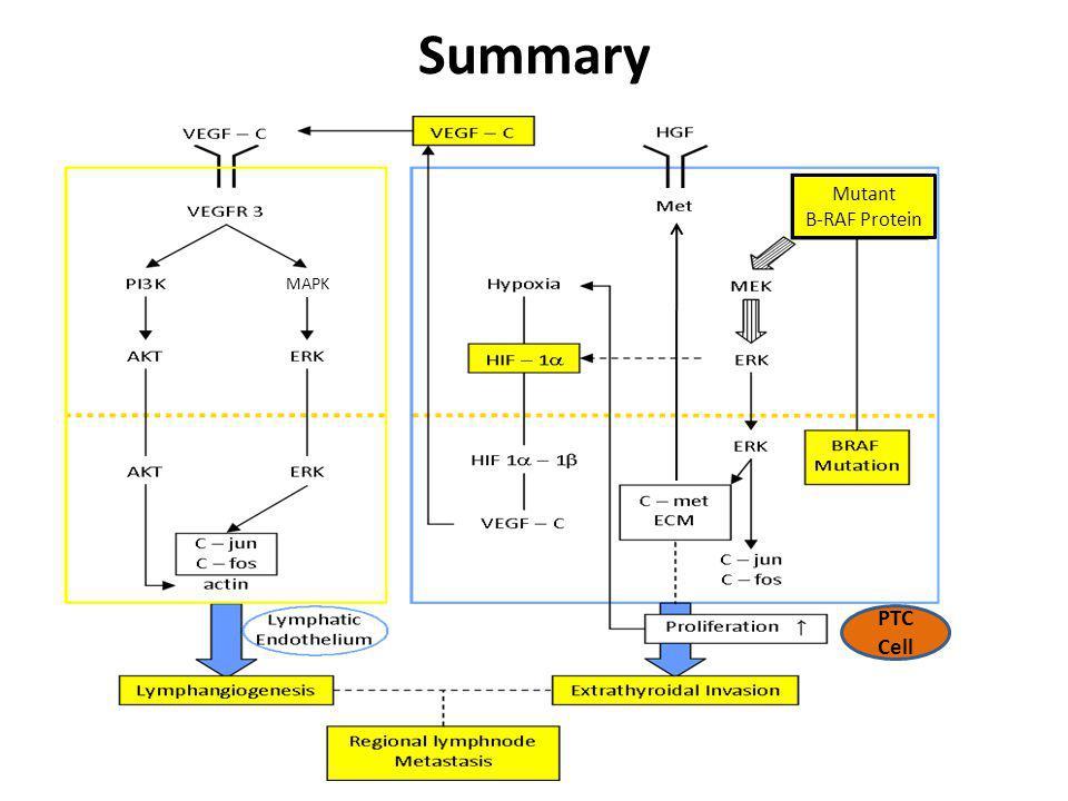 Summary MAPK Mutant B-RAF Protein PTC Cell