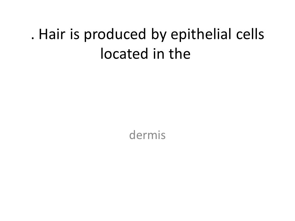 . Hair is produced by epithelial cells located in the dermis