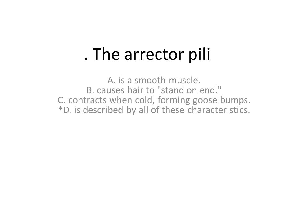 The arrector pili A.is a smooth muscle. B. causes hair to stand on end. C.