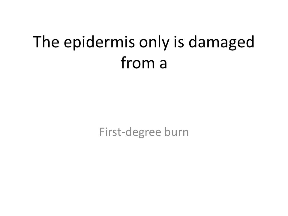 The epidermis only is damaged from a First-degree burn