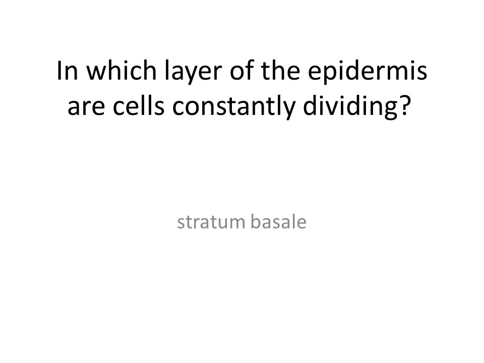 In which layer of the epidermis are cells constantly dividing? stratum basale