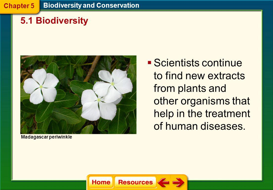 The Importance of Biodiversity Biodiversity and Conservation Most of the worlds food crops come from just a few species. Domestic corn plant Teosinte